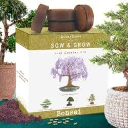 birthday gifts for boyfiend - tree kit