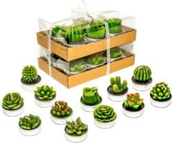 Phyther Cactus Tealight Candles
