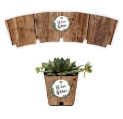 Succulent Wraps, Let Love Grow