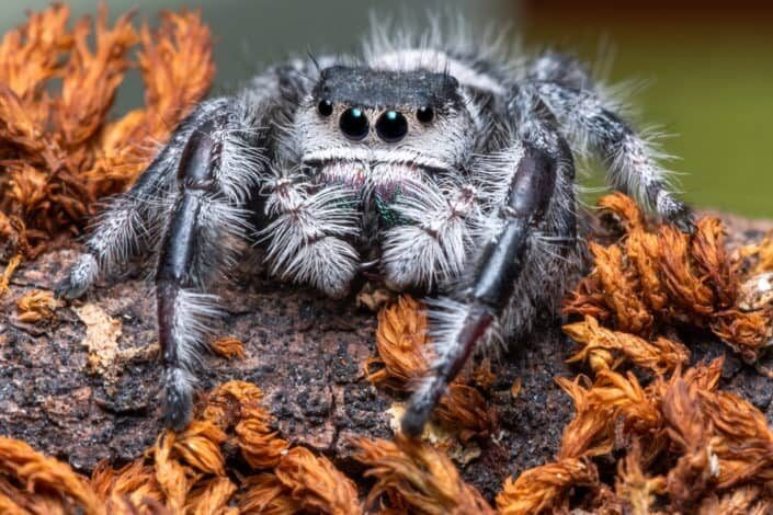 close up photo of a spider